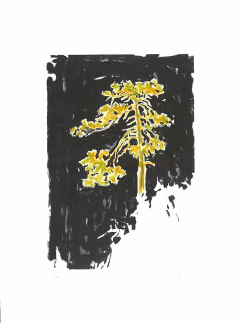 <b>Yellow Pine</b><br/>Etching, aquatint and 2RC Essence Technique on 4 copper plates, printed in 4 colours<br/><br/>79.5 x 54.5 cm, Magnani paper 120 x 90 cm<br/>2011<br/>Edition of 40, IV Artist proofs and 6 dedicated copies. Printed at Vigna Antoniniana-2RC, Rome, Italy. Published by 2RCCAFA, Beijing